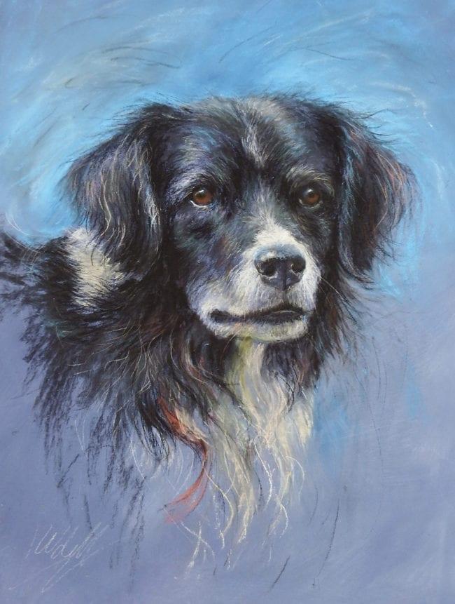 Collie, £345
