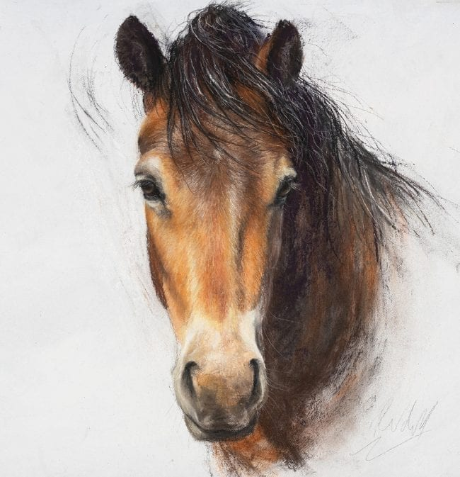 Exmoor Pony Sketch 5, SOLD