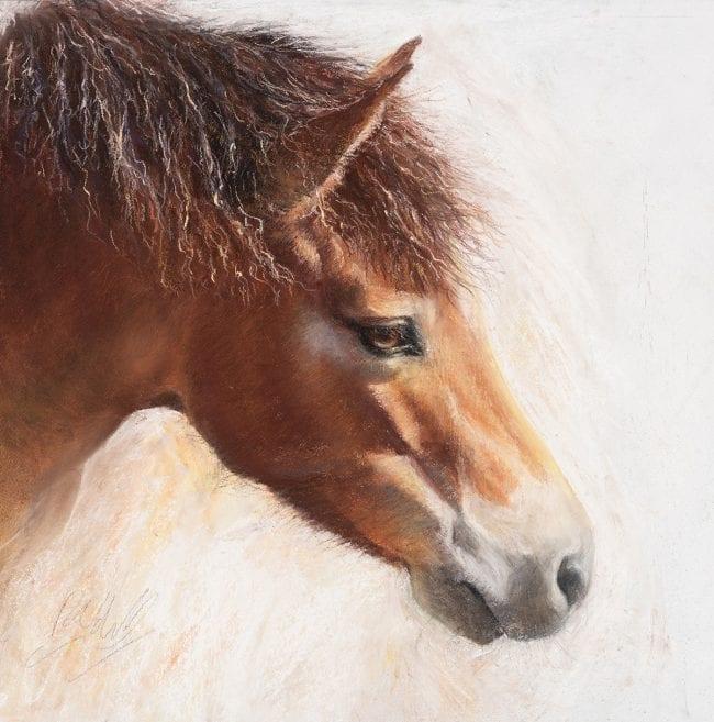 Exmoor Pony Sketch 6, £245
